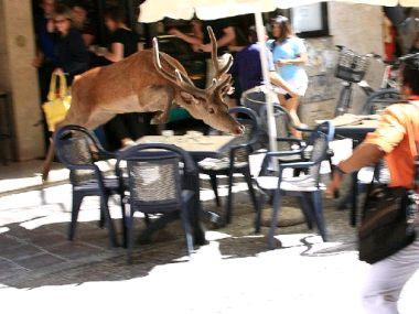 cervo in centro a Bolzano