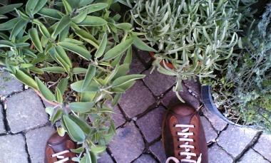 scarpe camper tra la salvia